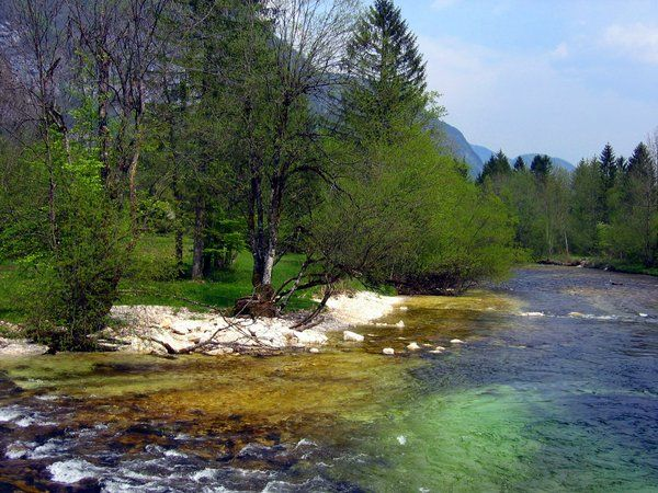 Green river Savinja, Slovenia by lusi