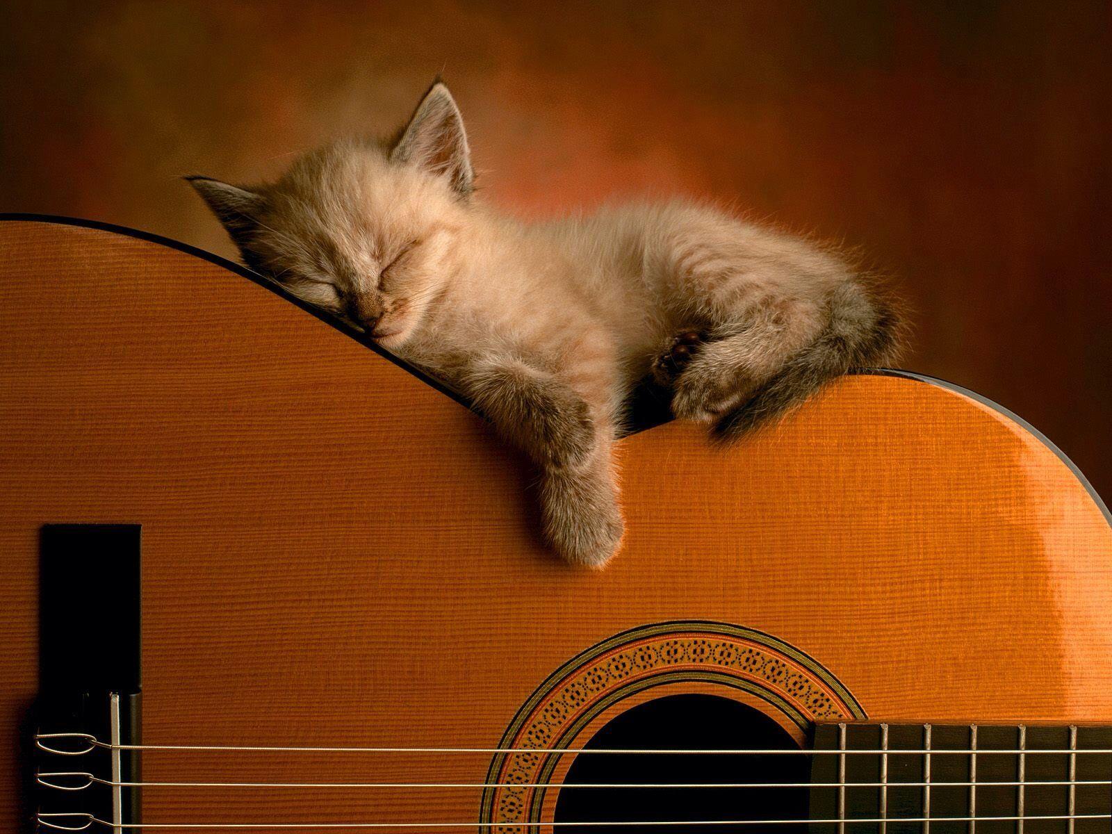 Guitar With A Kitten Sleeping Sleeping Kitten Funny Cat Wallpaper Kittens Cutest
