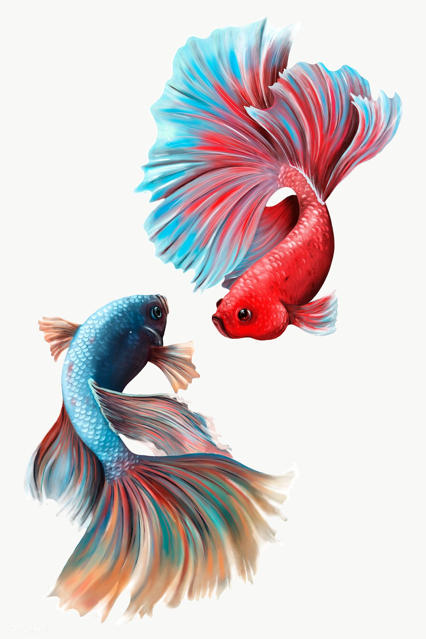 Colorful Betta Fishes Design Element Premium Image By Rawpixel Com Te In 2021 Fish Drawings Betta Fish Painted Rock Animals