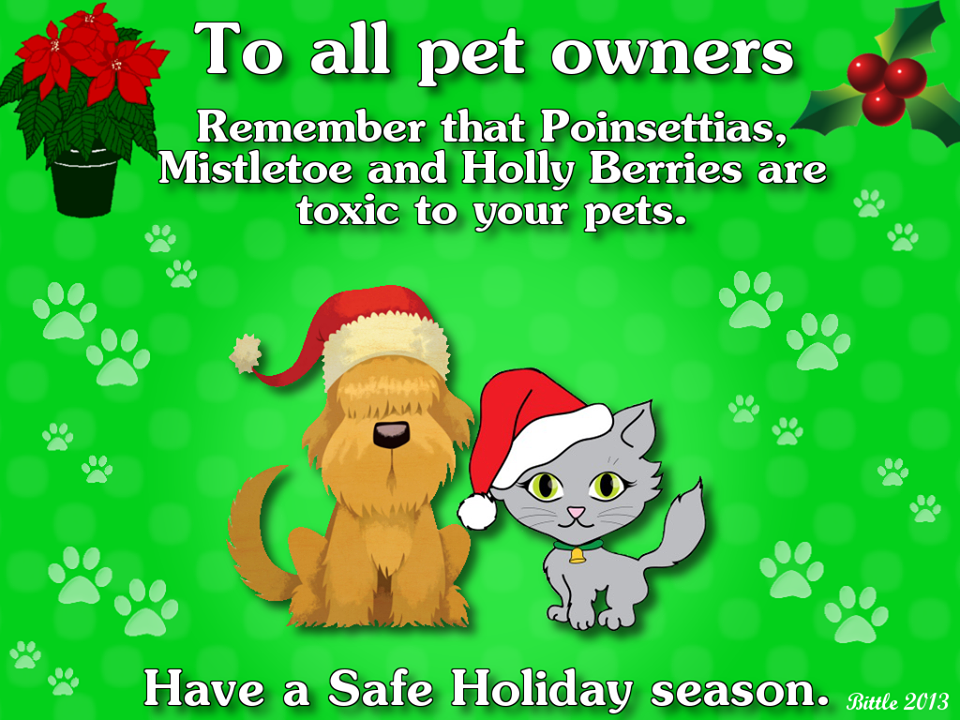 To all pet owners