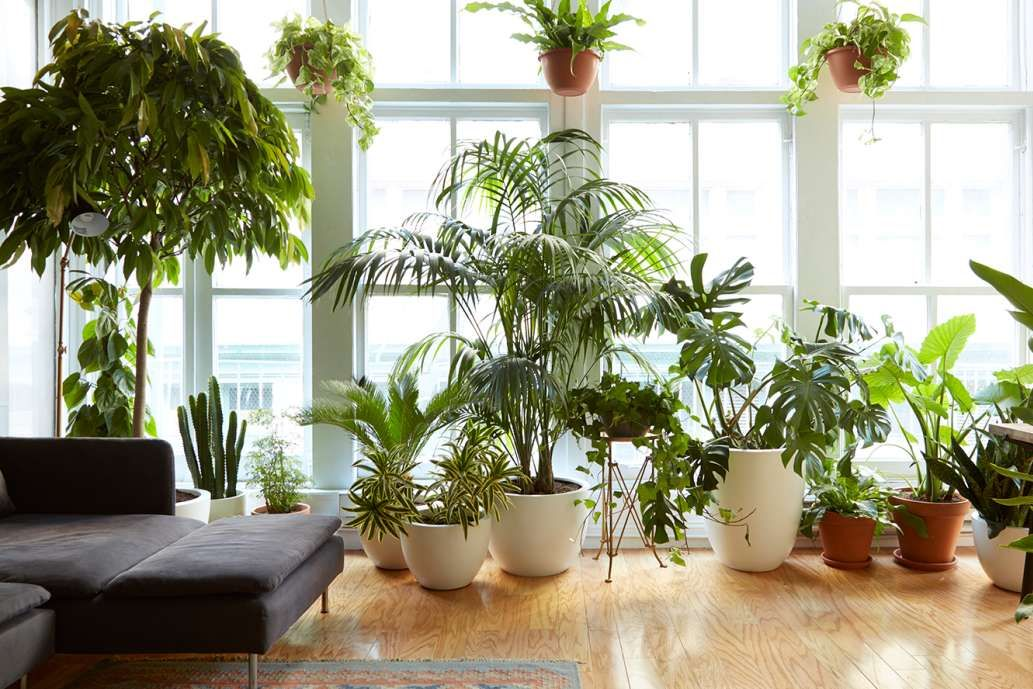 Photo of 8 Houseplants that Can Survive Urban Apartments, Low Light a…
