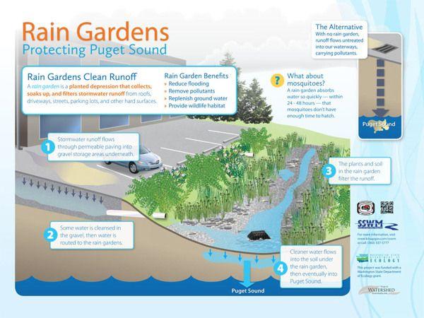 Graphic Garden Illustration Rain Garden Garden Illustration