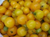 Ildi Heirloom Cherry Tomato from TomatoBob.com