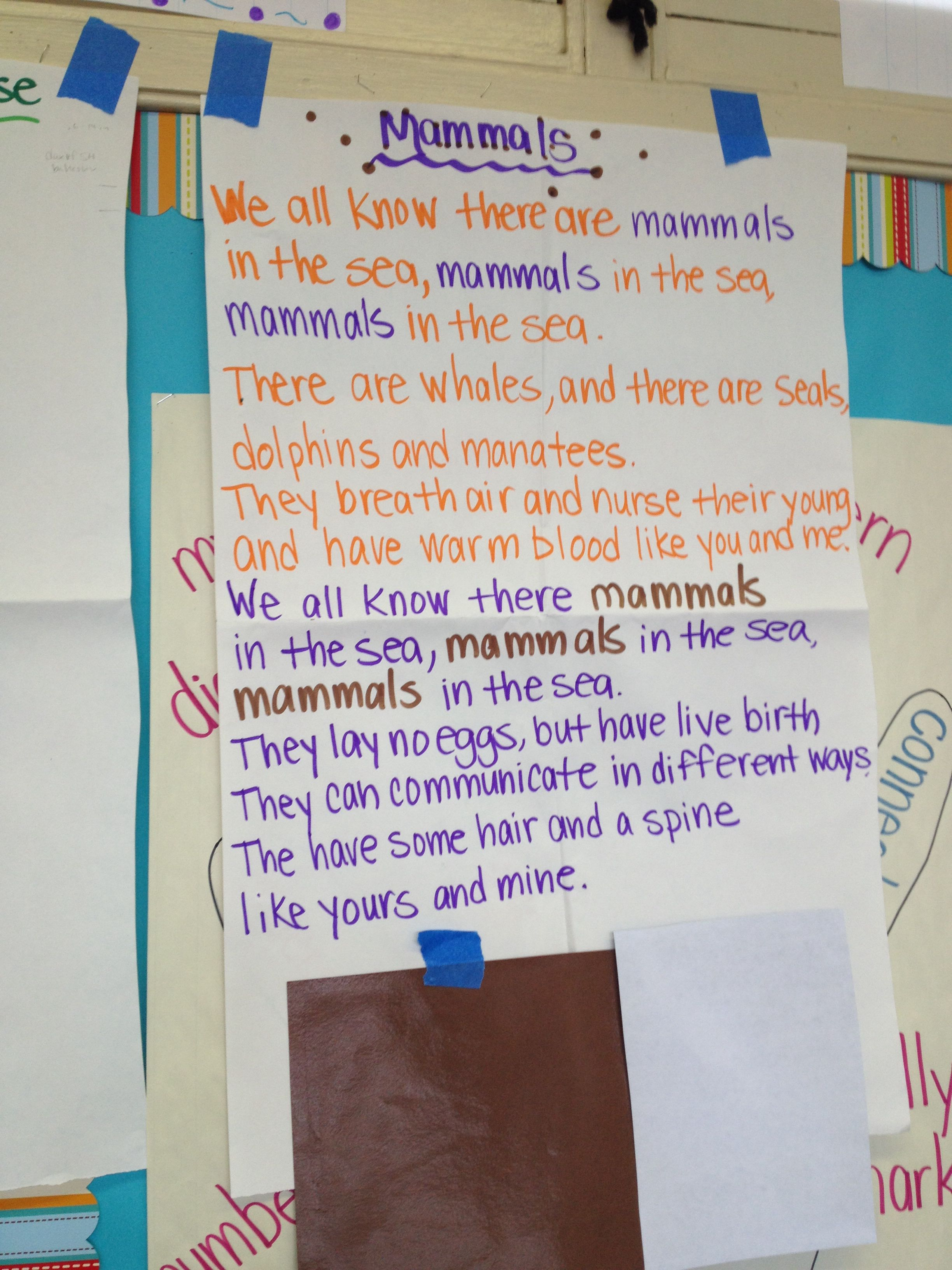 Mammals Chant In An Ocean Unit For 1st Grade What Animals Need To Survive