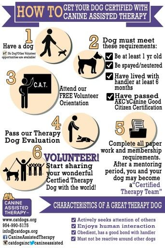How to get your dog to be CAT    Certified Assistant Therapy