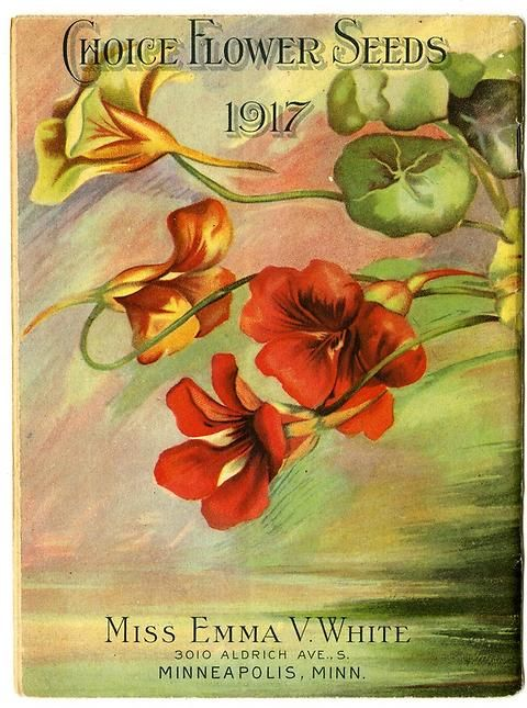 "Nasturtium peek out from the side of the back cover of Emma V. White's 1917 catalogue. Emma called herself the ""North Star Seedswoman"" and had her first mailing in 1896. She produced catalogues with colourful, hand painted covers aimed at female customers."