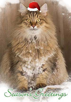 This cat really likes snow. Notice the snowy dreadlocks.