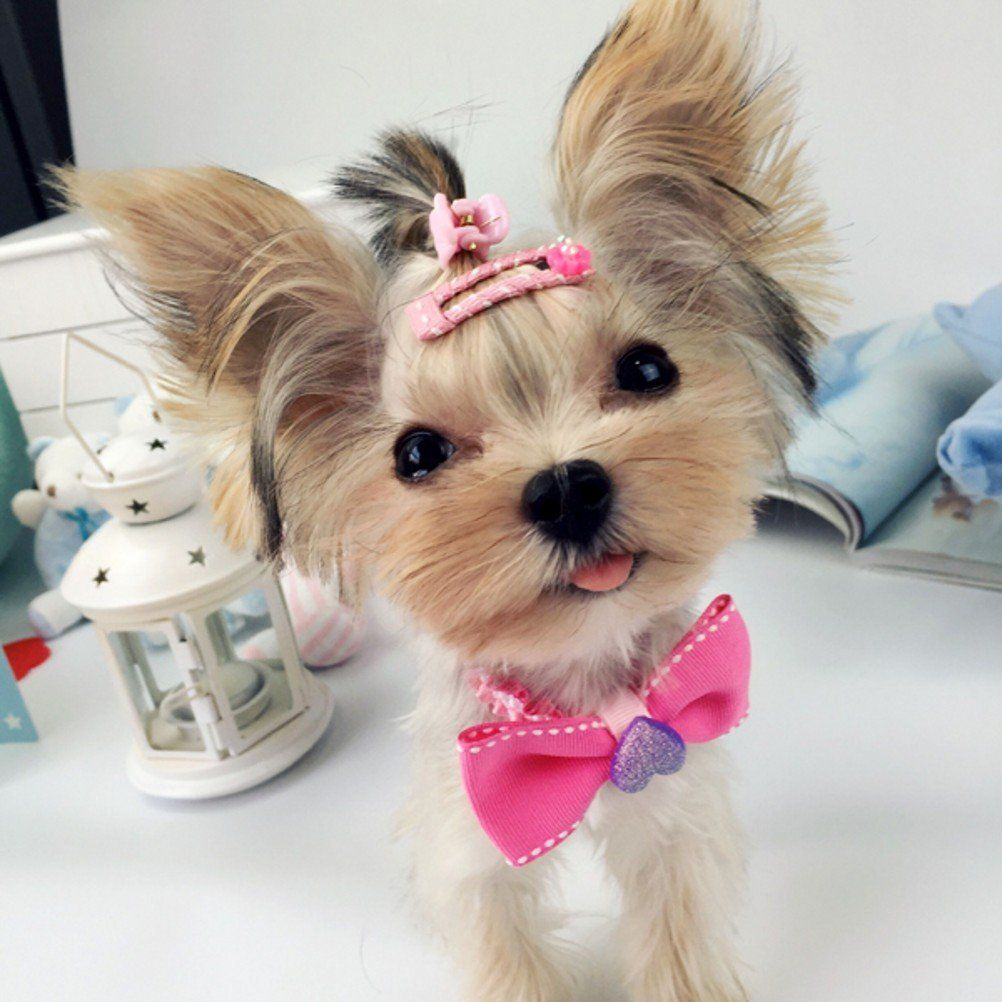 Amazon Com Pet Show Handmade Assorted Cute Pet Small Dogs Hair Bows Clips For Short Hairs Animals Cats Puppy Groomi Dog Hair Bows Pet Costumes Puppy Grooming