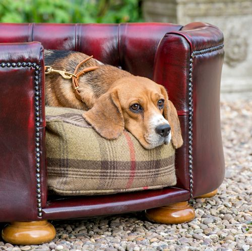 Luxury Dog Chesterfields From Lords Labradors Dog Bed Dogs