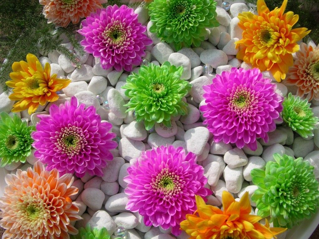 Flowers Natural Forms Flowers Pinterest Beautiful Flowers