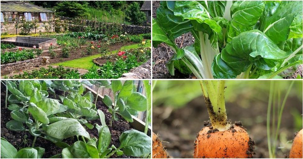 6 hortalizas para cultivar durante todo el a o plantas for Plantas de todo el ano