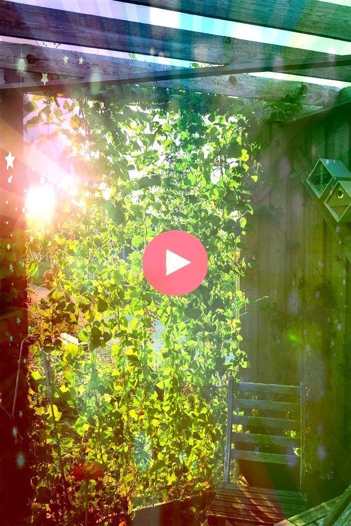 #narrowbalcony #fascinating #fascinat #balcony #narrow #garden #design #ideas #shopy #only #home #in #faFascinating narrow balcony garden ideas only in shopy home design  Fascinating narrow balcony garden ideas only in shopy home design Fascinating narrow balcony garden ideas only in shopy home design  Fascinating narrow balcony garden ideas only in shopy home design Fascinating narrow balcony garden ideas only in shopy home design  FaFascinating narrow balcony garden ideas only in shopy ... #na #narrowbalcony