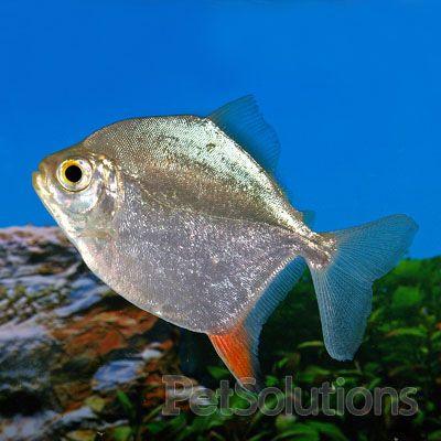 Pin On Feesh And My Aquarium