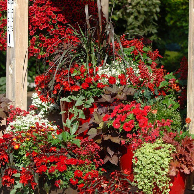 Terrassen-Gestaltung mit roten Sommerblumen