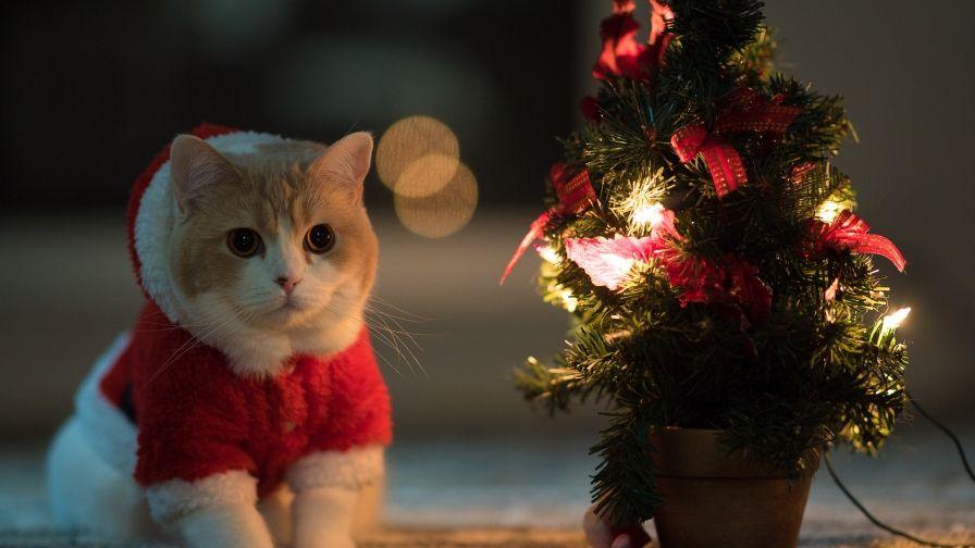 gepind van kepguru new year wallpaper tree hd wallpaper christmas kitten christmas mood