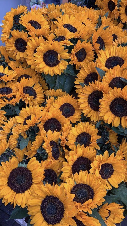 flowersbackgroundiphone Flower phone wallpaper