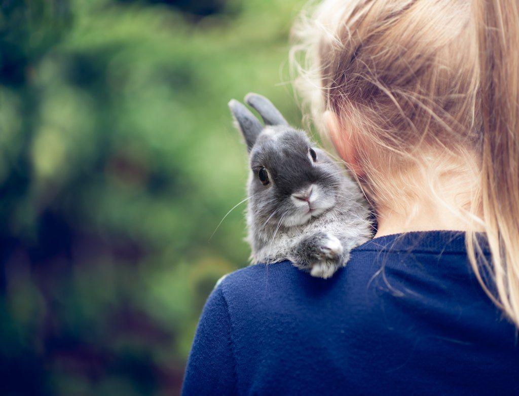 Bunny friend ~ by angiel
