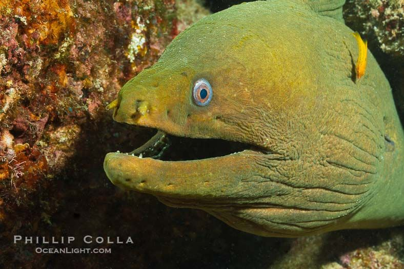 Underwater Photo Moray Eel Marine Life Underwater