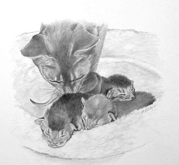 Cat And Kittens Art Cat Pencil Drawing Print Abyssinian Cats Etsy Kitten Drawing Kitten Art Cat Art