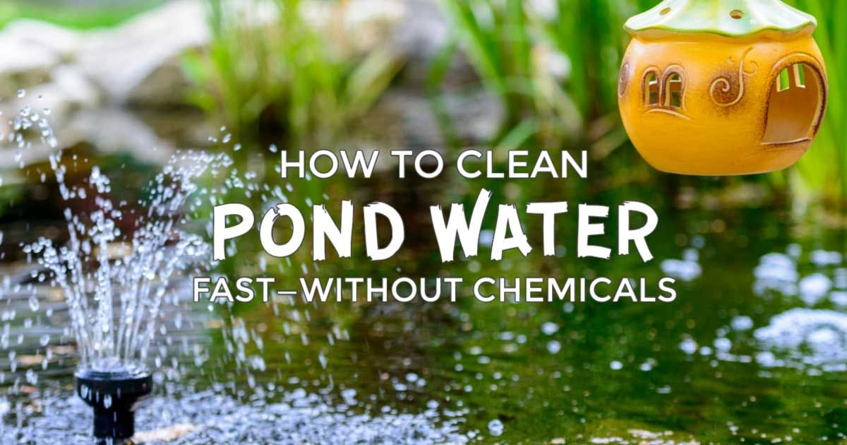 How to clean gross murky pond water fastwithout chemicals
