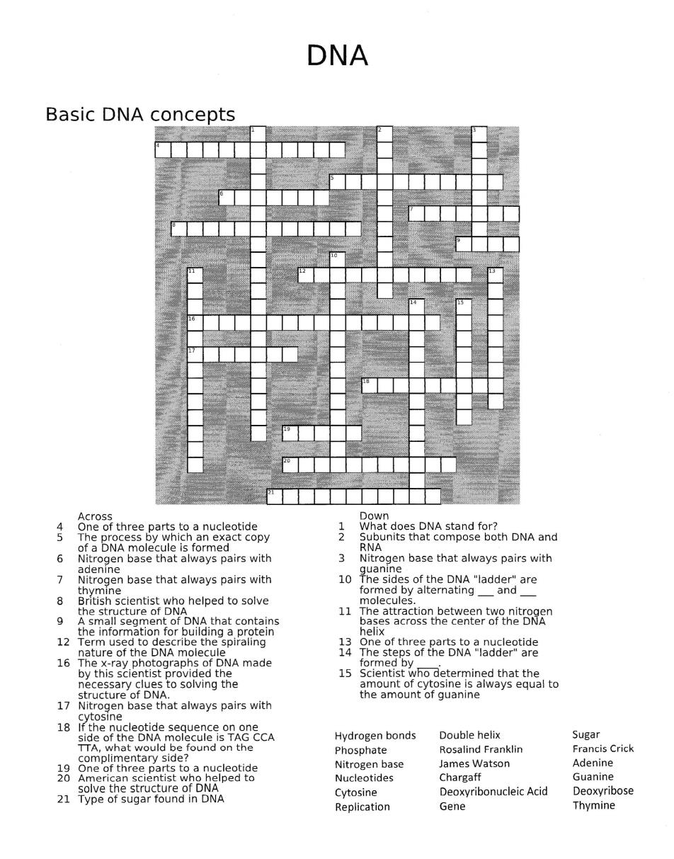 Dnacrossword Basicdnaconcepts Pdf Dna Molecule Molecules Basic