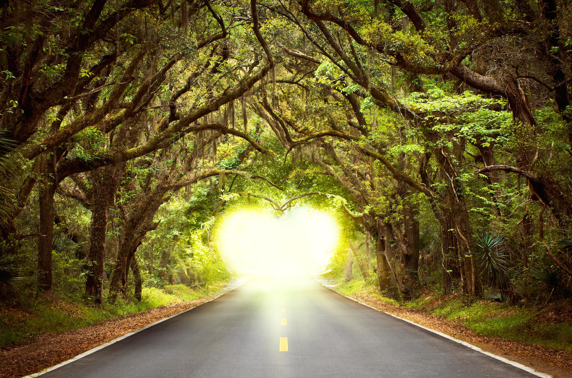 Take a breathtaking drive along Tallahasseeu0027s scenic canopy roads. & Take a breathtaking drive along Tallahasseeu0027s scenic canopy roads ...