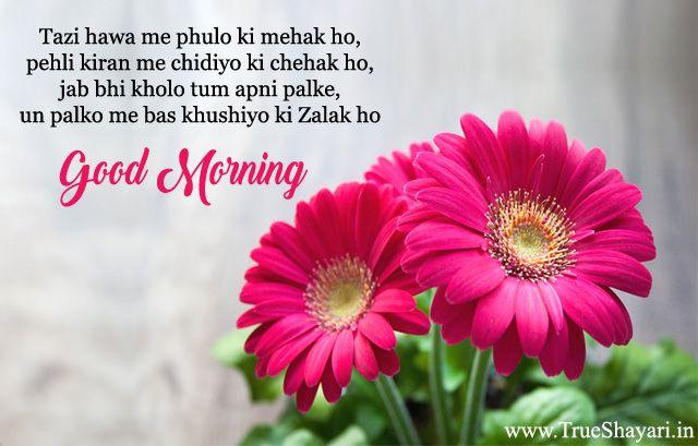 Good Morning Shayari In Hindi Language Goodmorning Goodmorningshayari Shayarimages Shayari Beautiful Pink Flowers Flowers Gerbera Flower