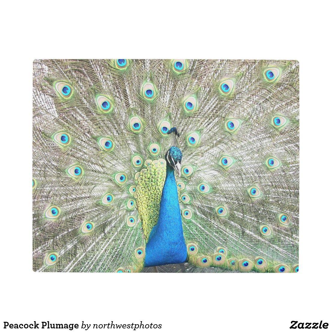 Peacock plumage metal print wall art pinterest