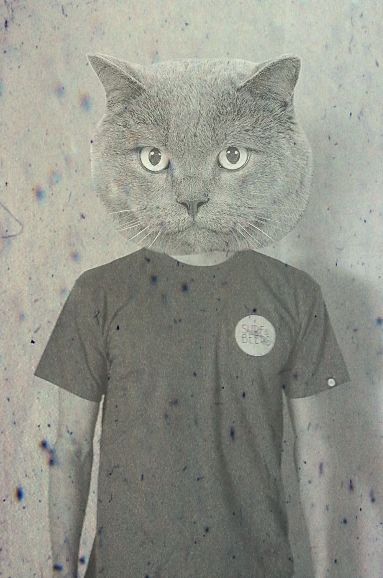 Surfer Cat