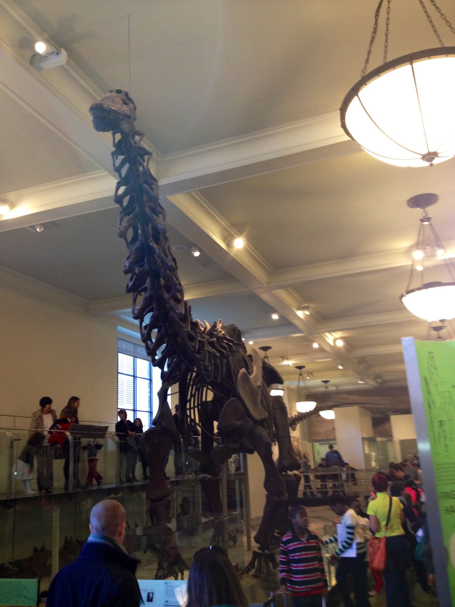 Diplodocus from the front.