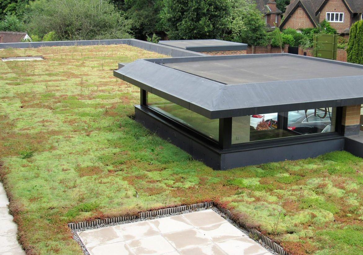 Green Roof Trays Green Roof Trays In 2020 Green Roof Installation Green Roof Green Roof System