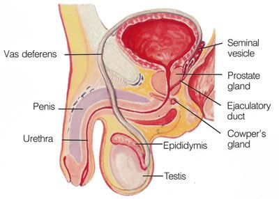 Tanda Utama Infertilitas Pria - Gejala Mandul Pada Pria Tanda utama infertilitas Pria adalah ketidakmampuan untuk membuat pasangan atau istri hamil. Mungkin tidak ada tanda-tanda jelas lain atau gejala. Dalam beberapa kasus, bagaimanapun, masalah mendasar seperti kelainan bawaan,  http://tipsehatcantikalami.blogspot.com/2013/01/tanda-utama-infertilitas-pria-gejala.html