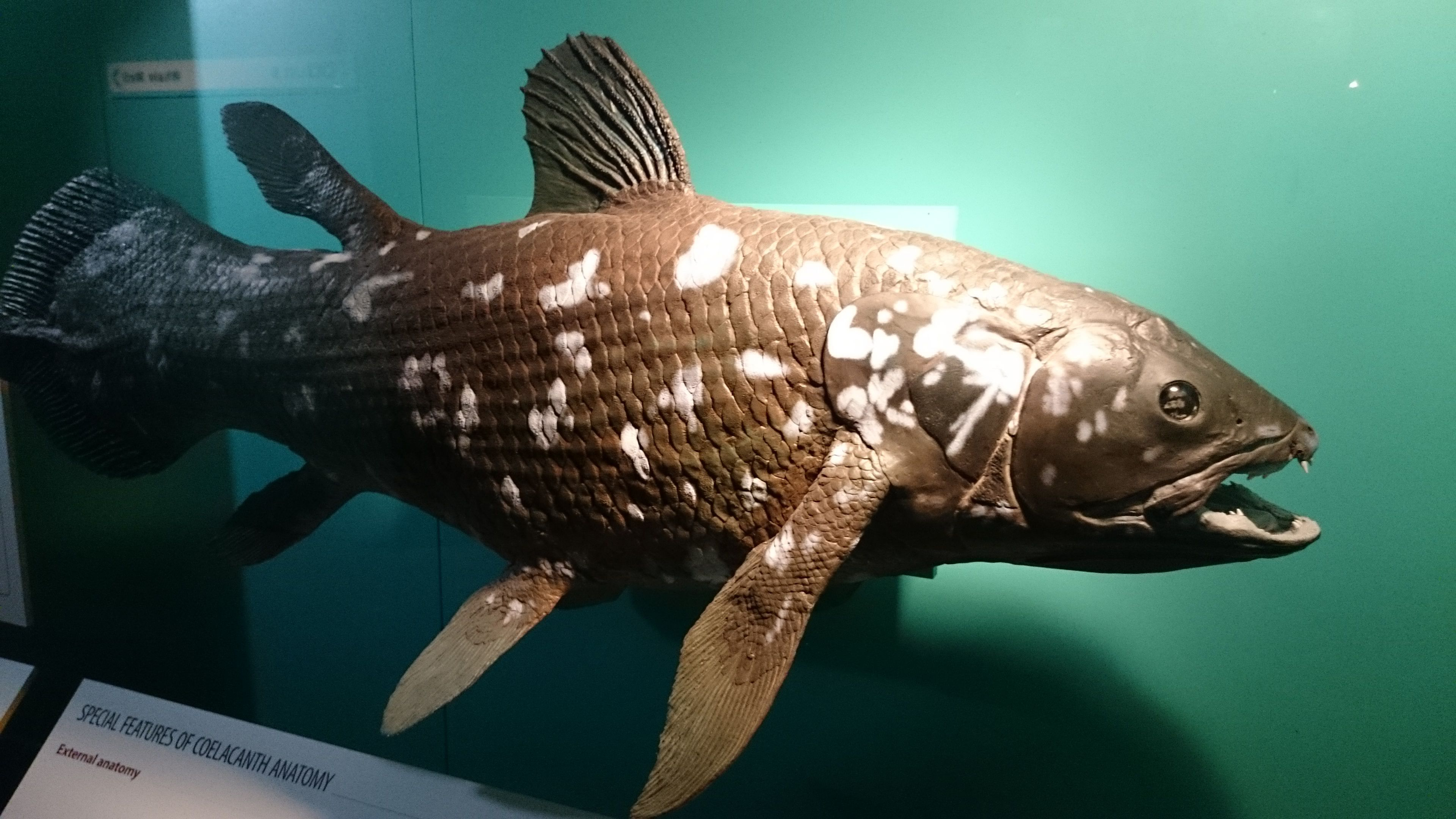 Meet Coelacanth, a Living Fish Thought to Be Extinct