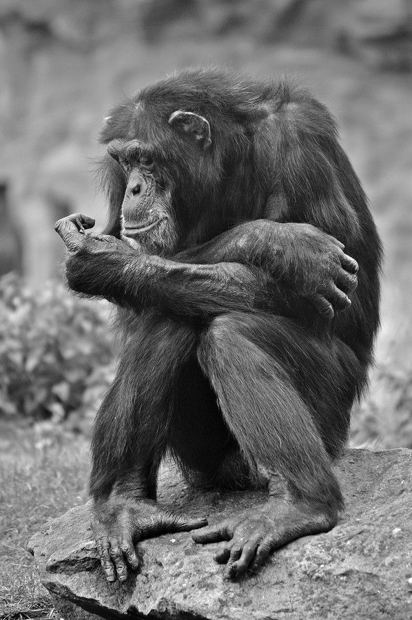 VERY INTERESTING: World Informative & Entertaining ...  |Very Interesting Animals