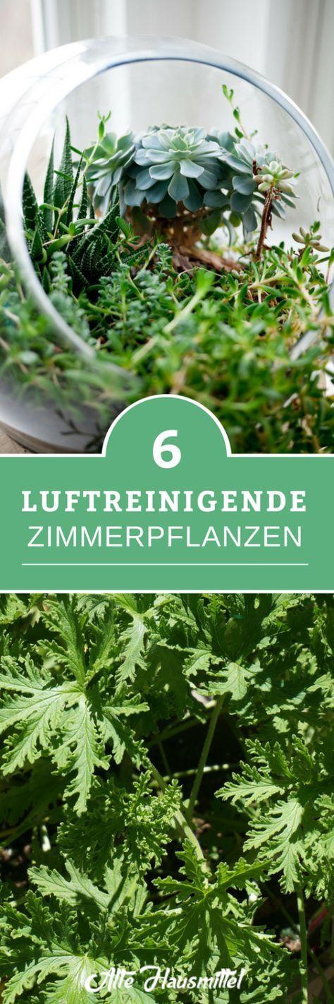 6 Luftreinigende Zimmerpflanzen Pflanzen Zimmerpflanzen Luft Reinigen Pflanzen