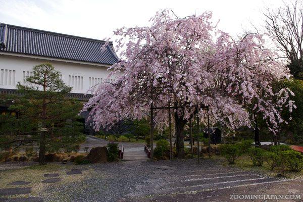 Shoryuji Castle in Kyoto in spring.