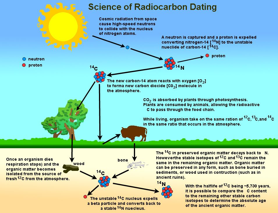What is radiocarbon dating method