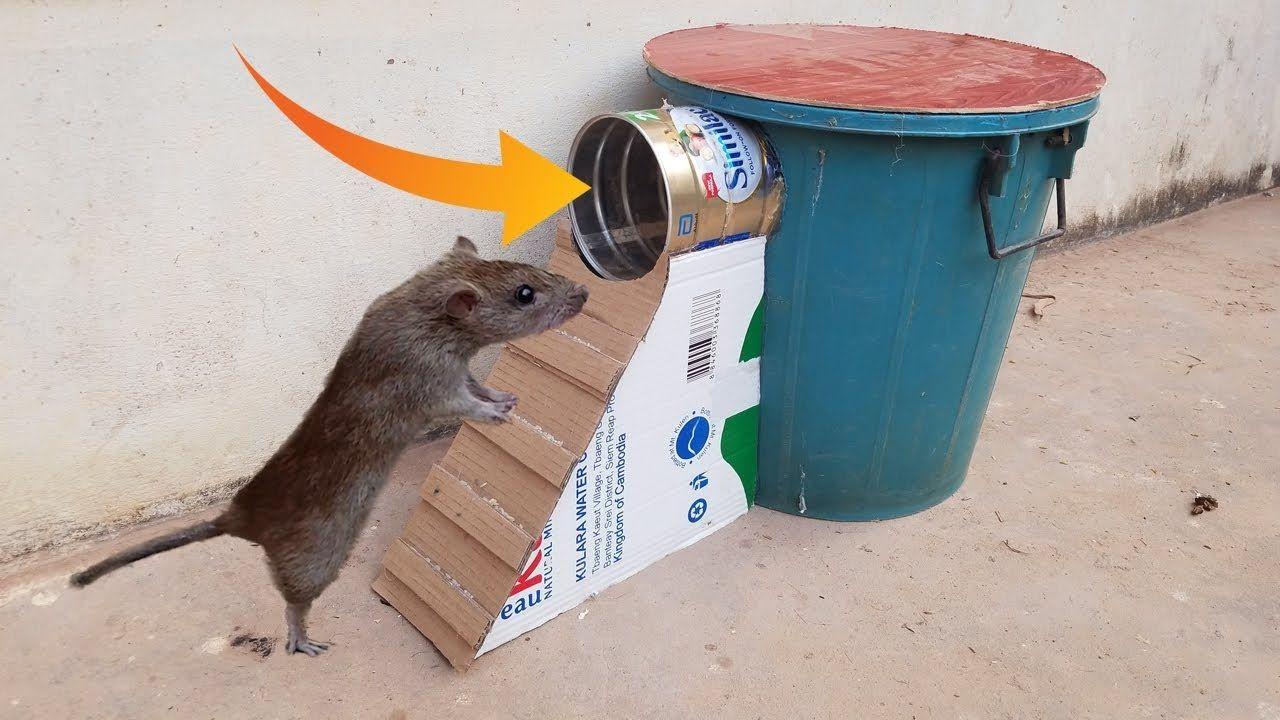 Best mouse trap using bucketcan milk homemade mouserat