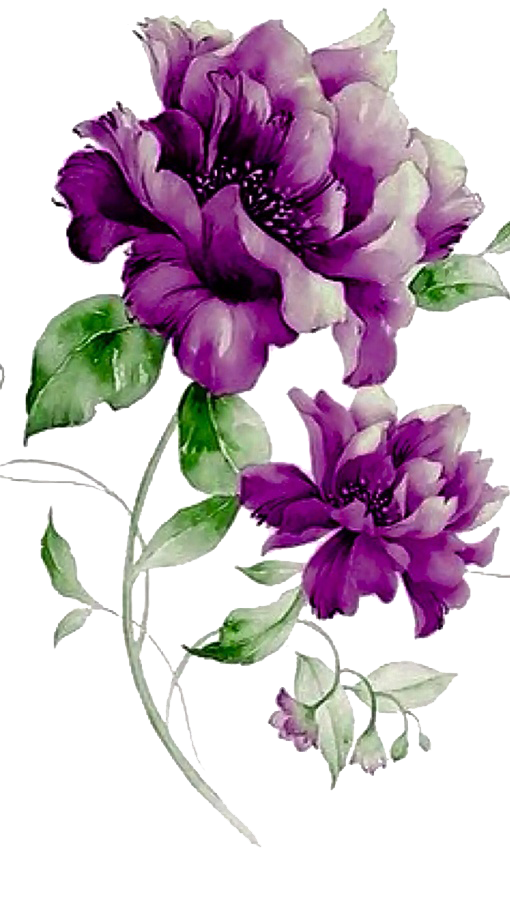 Pin by Angad Yadav on flower (With images) Flower