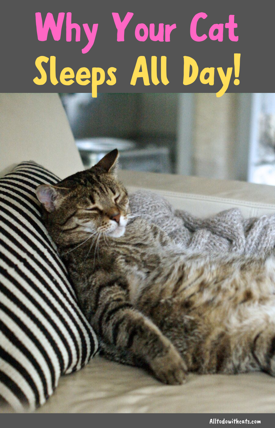 Why Do Cats Sleep So much? (Discover Amazing Facts) (With