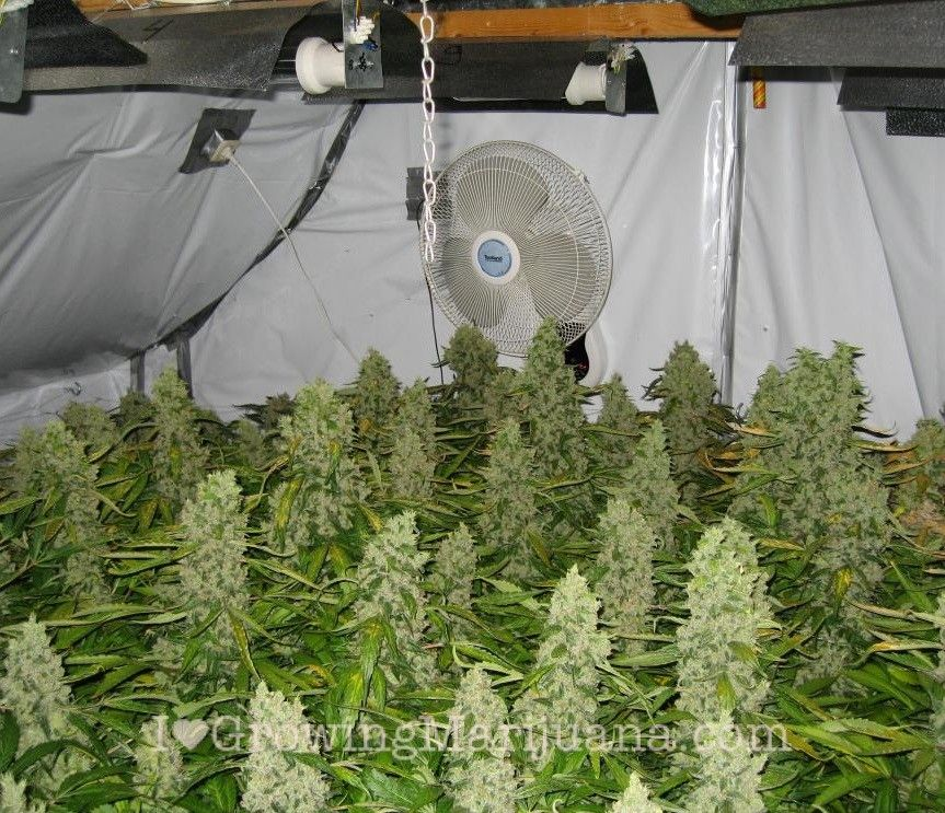 how to build an indoor marijuana grow room. Black Bedroom Furniture Sets. Home Design Ideas