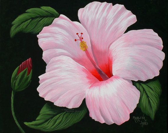 Light Pink Hibiscus With Bud 16 X20 Original Acrylic Painting