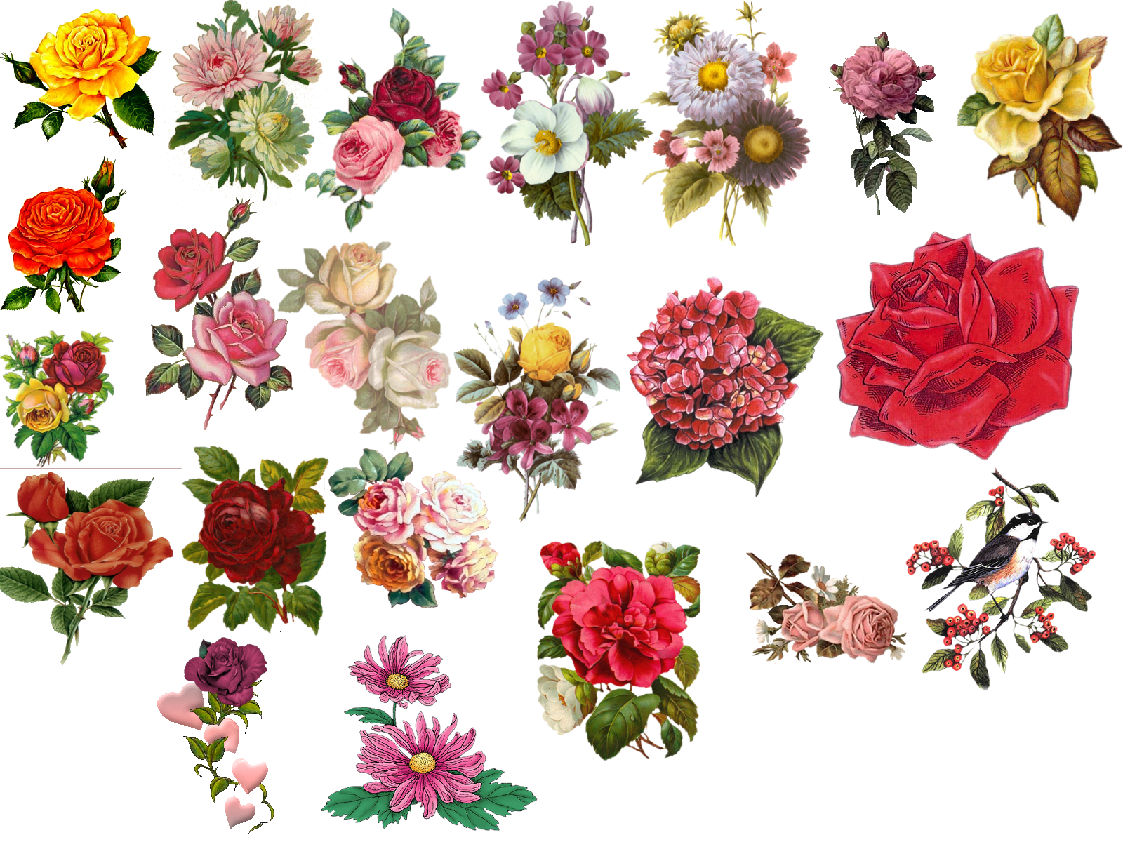 Vintage flower pictures beautiful flowers drawings pinterest vintage flower pictures beautiful flowers dhlflorist Image collections