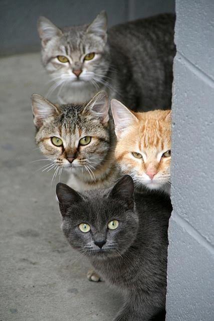 Epingle Par Geraldine Pons Sur Cats Chats Adorables Chats Et Chatons Chat Mignon