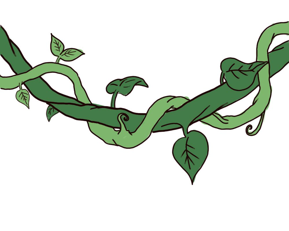 How To Draw A Jungle Vine Vine Drawing Tree Drawing Plant Drawing