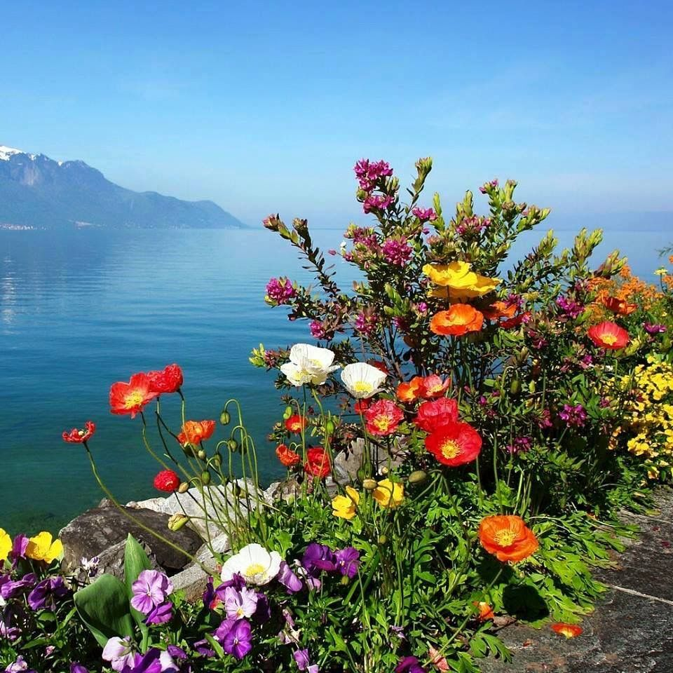 Pin by karen judge on flowers trees and mushrooms pinterest beautiful scenery izmirmasajfo