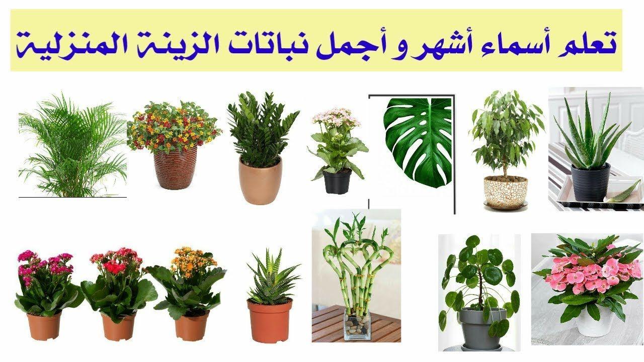 تعلم أسماء أشهر و أجمل نباتات الزينة المنزلية فيديومهم جدا Https Youtu Be 5n Vvvjnjqe Plants Flowers Last Longer Flowers