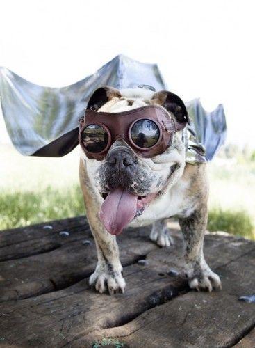 steam punk dog