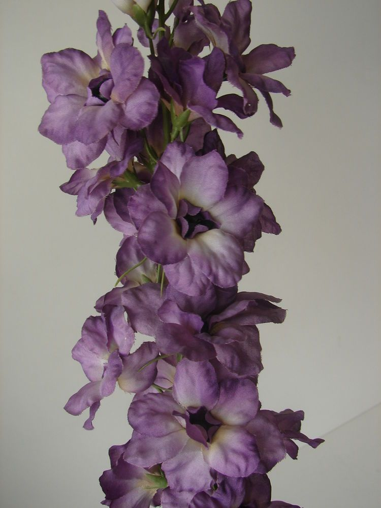 1 Karton á 12 Pflanzen GARDEN DELPHINIUM Rittersporn lila\/weiß - wohnzimmer deko lila