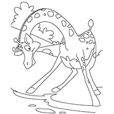 Deer Drinking Water Coloring Pages The Coloring Pages Coloring